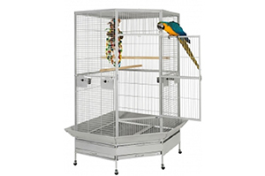 Cages and Play Stands
