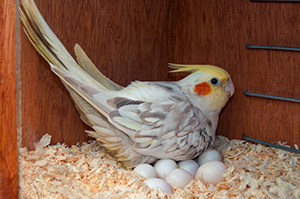 Nesting/Breeding Products